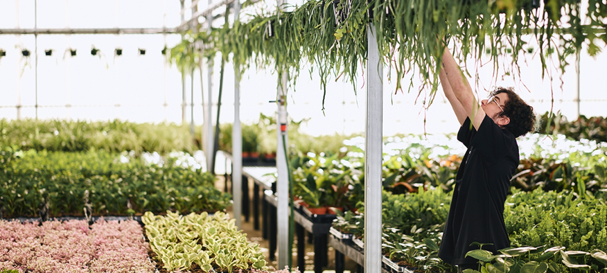 One of Australia's largest wholesale plant & tree nurseries
