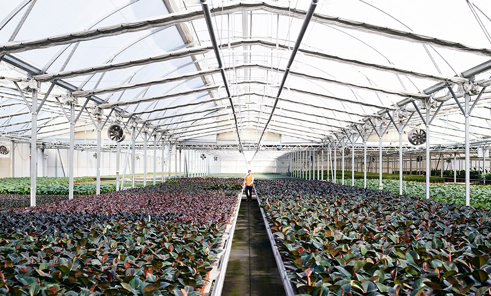 Extensive range of seasonal indoor and outdoor plants